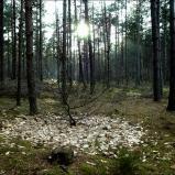 Forêts du Nord, 2004
