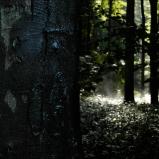 Forêt de Saint-Germain, 2005