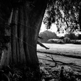 Mes champs visuels - Photo © Ernesto Timor