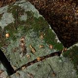 Extrait de l'exposition Le fil de la pierre