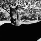 Photo © Ernesto Timor -