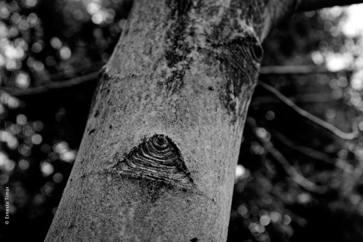 Photo © Ernesto Timor