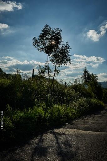 Photo © Ernesto Timor - deux arbustes et le soleil