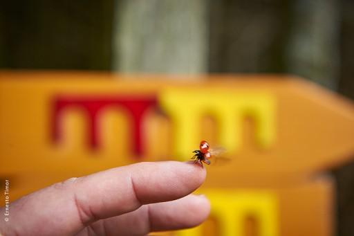 Photo © Ernesto Timor - Suivez cette coccinelle !
