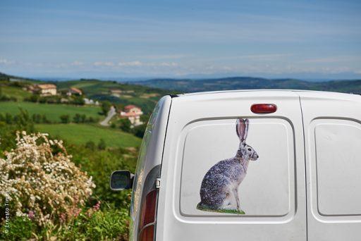 Photo © Ernesto Timor - Un lièvre en tôle