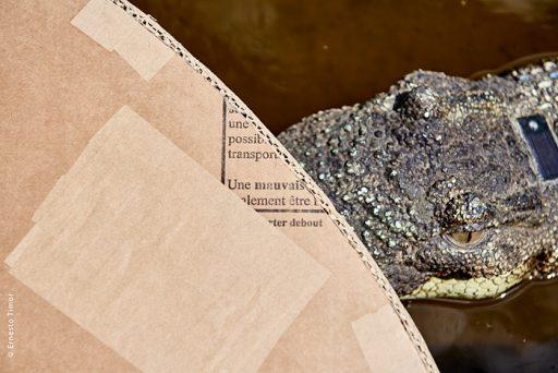 Photo © Ernesto Timor - Tout en carton