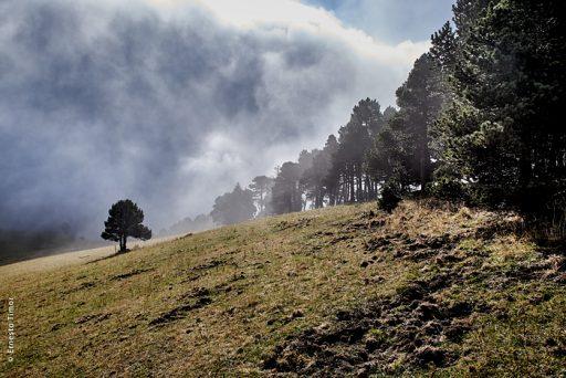 Photo © Ernesto Timor - Hauts plateaux