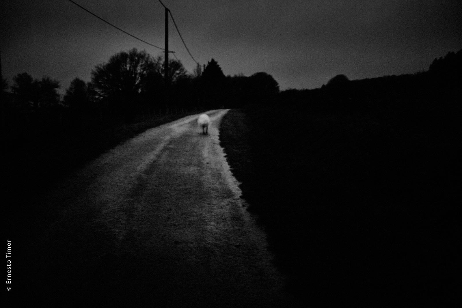 Photo © Ernesto Timor - Nocturne avec bête